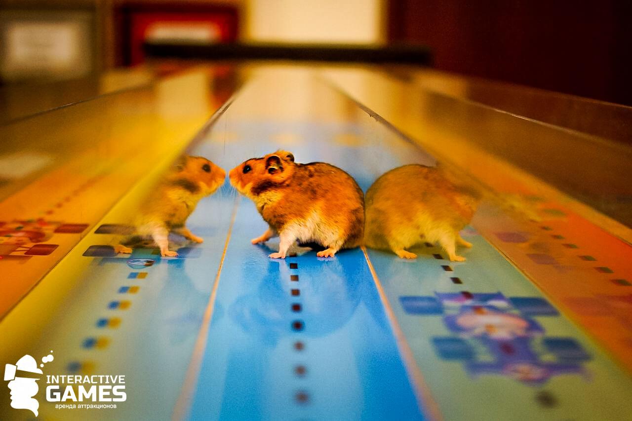 Бега мышиные